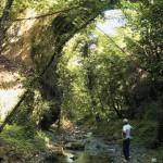 γεφυρα λαδα2