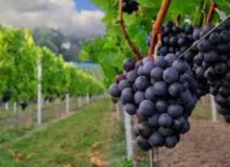 Η Γιορτή του Κρασιού στις 30 Ιουλίου
