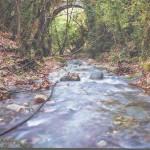 Δαφνίος Ποταμός-παραπόταμος του Νέδοντα